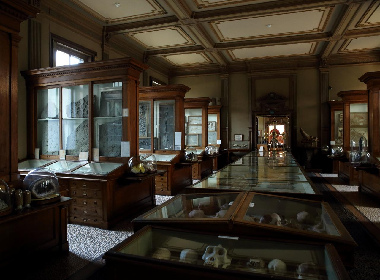 Foto Teylers Museum in Haarlem, Zien, Musea & galleries - #2